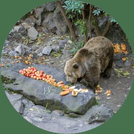 Medvěd na zámku Český Krumlov